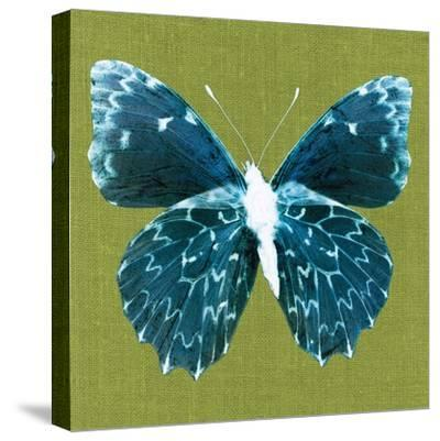 Green Pop Butterfly-Christine Caldwell-Stretched Canvas Print