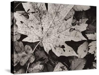 Forest Detail-Brett Aniballi-Stretched Canvas Print