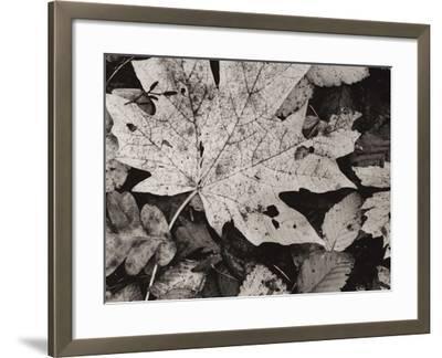 Forest Detail-Brett Aniballi-Framed Art Print