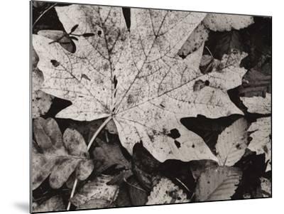 Forest Detail-Brett Aniballi-Mounted Art Print