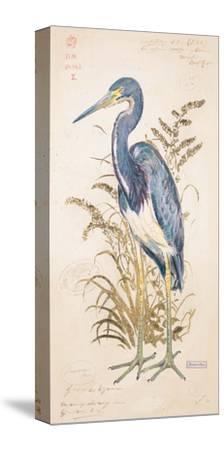 Tricolor Heron-Chad Barrett-Stretched Canvas Print