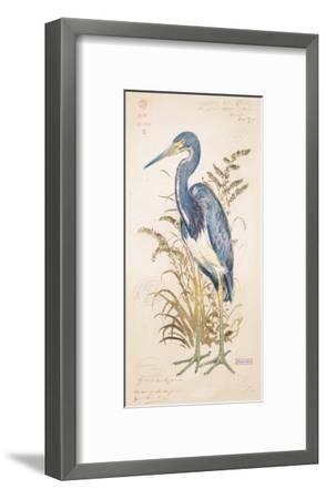 Tricolor Heron-Chad Barrett-Framed Art Print