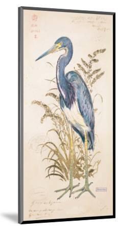 Tricolor Heron-Chad Barrett-Mounted Art Print