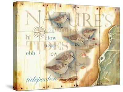 Nature's Tidepoolers-Mary Escobedo-Stretched Canvas Print