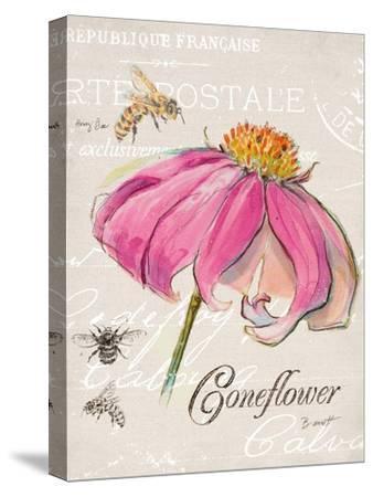 Sketchbook Coneflower-Chad Barrett-Stretched Canvas Print