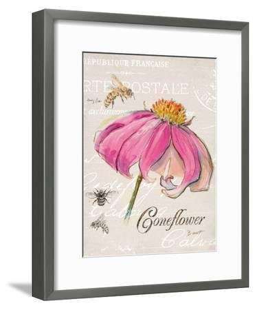 Sketchbook Coneflower-Chad Barrett-Framed Art Print
