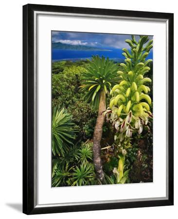 Giant Lobelia, Lobelia Gloria Montis, Lobelia Watershed Preserve, Maui, Hawaii-Frans Lanting-Framed Photographic Print