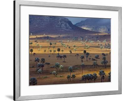 Palm Savanna, Horombe Plateau, Southern Madagascar-Frans Lanting-Framed Photographic Print