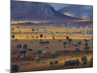 Palm Savanna, Horombe Plateau, Southern Madagascar-Frans Lanting-Mounted Photographic Print