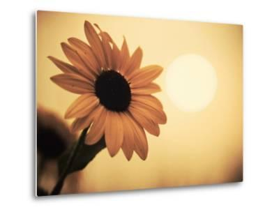 Environment: Sunflower Sunset Landscape Affected by Colorado Wildfires Near Boulder-Kevin Lange-Metal Print