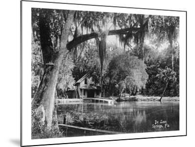 Deleon Springs, Florida - Scenic View-Lantern Press-Mounted Art Print