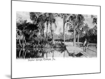 Tampa, Florida - View of Sulphur Springs-Lantern Press-Mounted Art Print