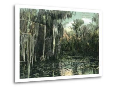 Florida - View of Pond Lilies and Hanging Moss-Lantern Press-Metal Print