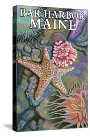 Bar Harbor, Maine - Tidepool Scene-Lantern Press-Stretched Canvas Print