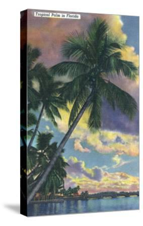 Florida - View of a Palm During Sunset-Lantern Press-Stretched Canvas Print