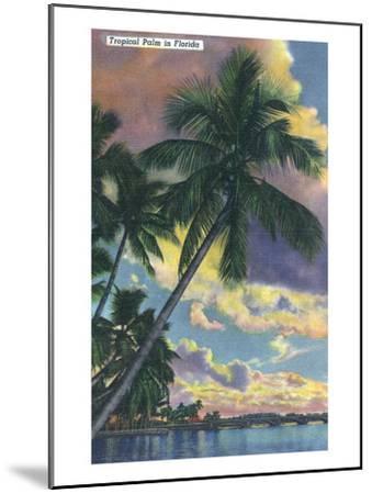 Florida - View of a Palm During Sunset-Lantern Press-Mounted Art Print