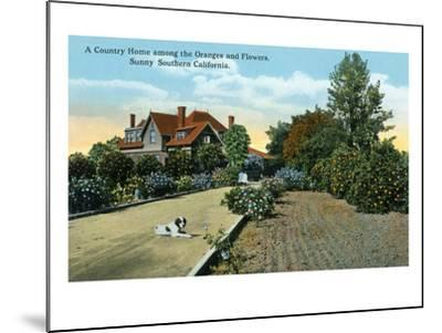 California - Country Home Among Oranges and Flowers Scene-Lantern Press-Mounted Art Print