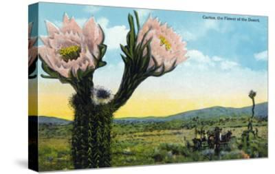 California - View of a Flowering Cactus-Lantern Press-Stretched Canvas Print