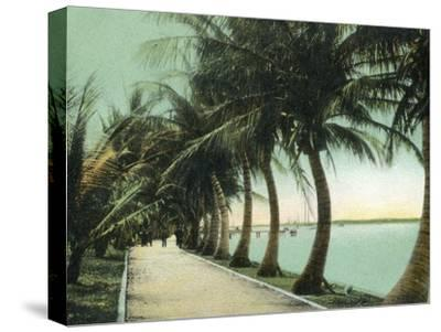 Palm Beach, Florida - Palm Walk Along Lake Worth-Lantern Press-Stretched Canvas Print