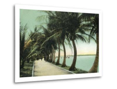 Palm Beach, Florida - Palm Walk Along Lake Worth-Lantern Press-Metal Print
