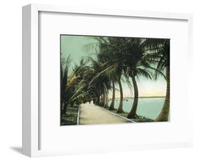 Palm Beach, Florida - Palm Walk Along Lake Worth-Lantern Press-Framed Art Print