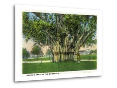 Key West, Florida - Barracks Banyan Tree Scene-Lantern Press-Metal Print