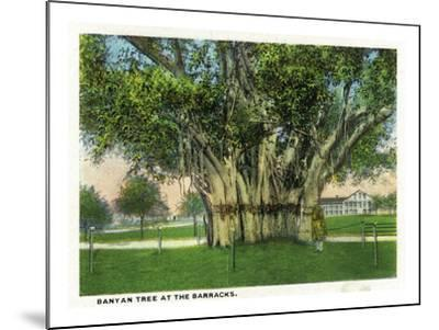 Key West, Florida - Barracks Banyan Tree Scene-Lantern Press-Mounted Art Print