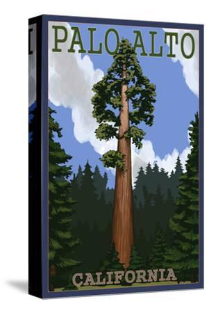 Palo Alto, California - California Redwoods-Lantern Press-Stretched Canvas Print