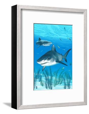 Tiger Shark-Lantern Press-Framed Art Print