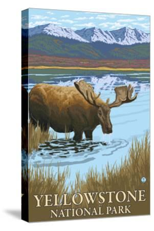 Yellowstone National Park - Moose Drinking in Lake-Lantern Press-Stretched Canvas Print