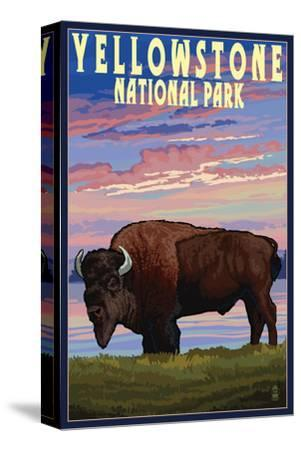 Yellowstone National Park - Bison and Sunset-Lantern Press-Stretched Canvas Print