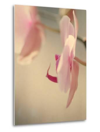Study of an Orchid VII-Mia Friedrich-Metal Print
