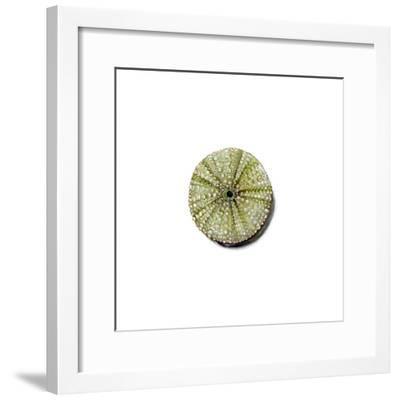 Urchin-Jane Kim-Framed Premium Giclee Print