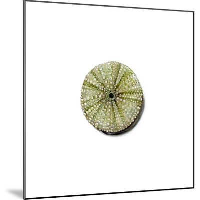 Urchin-Jane Kim-Mounted Premium Giclee Print