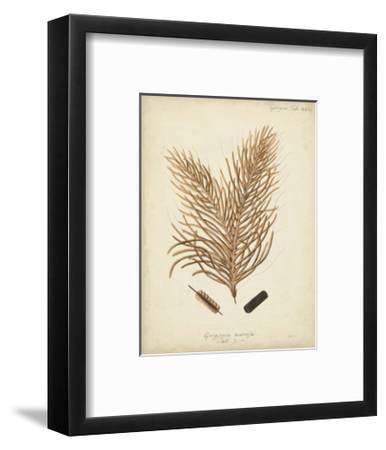 Coral Collection III-Johann Esper-Framed Art Print