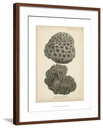 Coral Collection V-Johann Esper-Framed Art Print