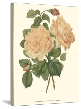 Vintage Roses III-Vision Studio-Stretched Canvas Print
