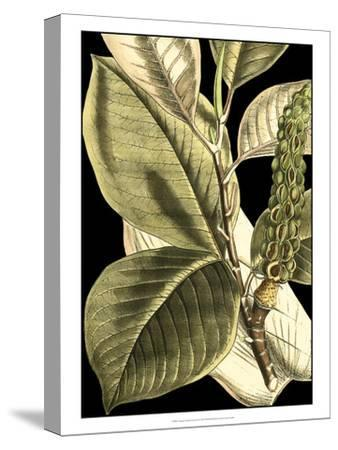 Tranquil Tropical Leaves II-Vision Studio-Stretched Canvas Print