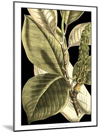 Tranquil Tropical Leaves II-Vision Studio-Mounted Art Print