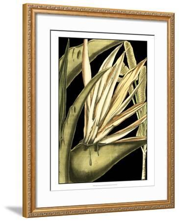 Tranquil Tropical Leaves III-Vision Studio-Framed Art Print