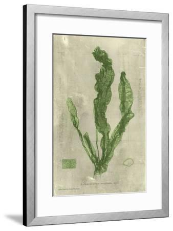 Emerald Seaweed IV--Framed Art Print