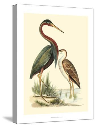 Water Birds III-Meyer H^l^-Stretched Canvas Print