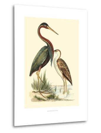 Water Birds III-Meyer H^l^-Metal Print
