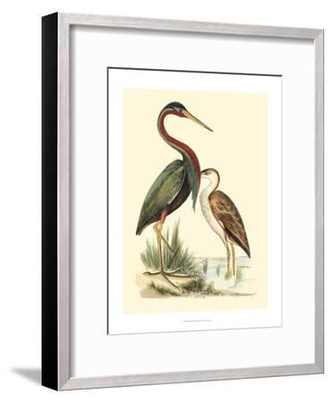 Water Birds III-Meyer H^l^-Framed Art Print