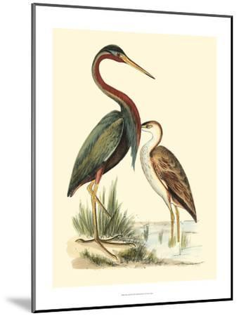 Water Birds III-Meyer H^l^-Mounted Art Print