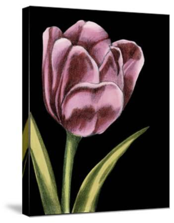 Vibrant Tulips III-Ethan Harper-Stretched Canvas Print