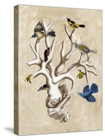 The Ornithologist's Dream II-Naomi McCavitt-Stretched Canvas Print