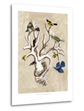 The Ornithologist's Dream II-Naomi McCavitt-Metal Print
