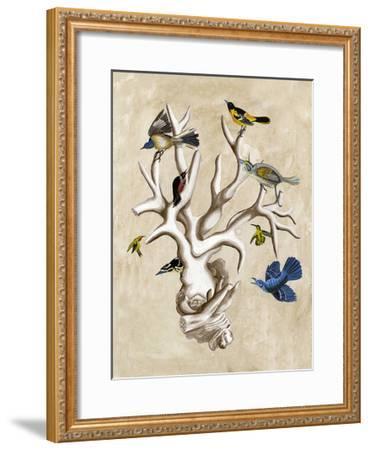 The Ornithologist's Dream II-Naomi McCavitt-Framed Art Print