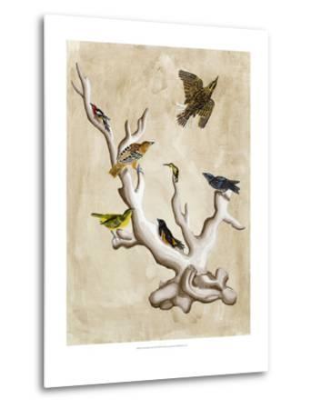 The Ornithologist's Dream III-Naomi McCavitt-Metal Print
